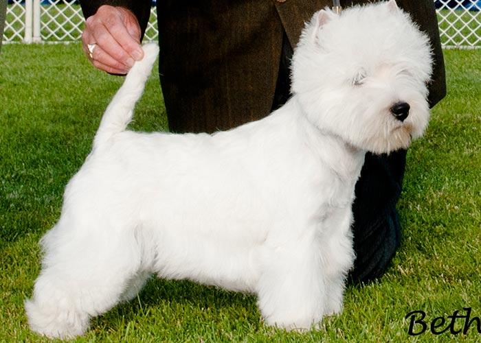 Home :: Windacre Kennels | Puppies | Award winning pedigrees