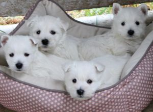 puppies-basket.jpg